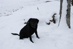 snow pics 2010 012